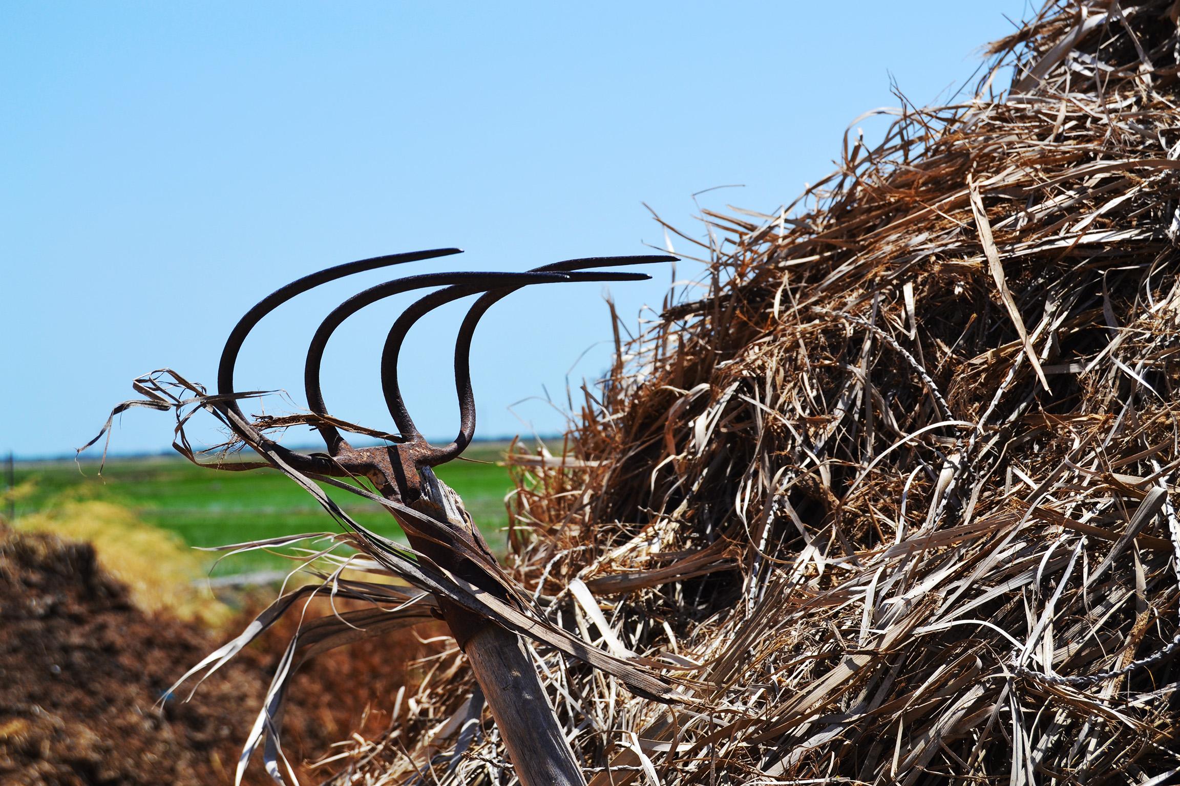 separar paja grano